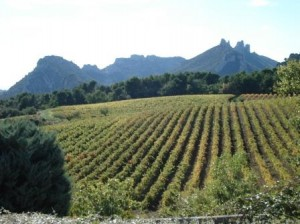 Rhone-valley-vineyards-with-dentelles-de-montmirail-in-background