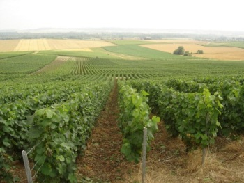 Vineyards Champagne