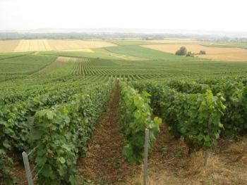 Vineyards Champagne
